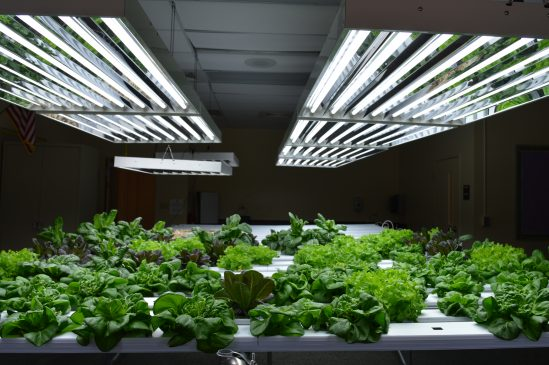 """""""The hydroponics lab right here, right now, will support the cafeteria salad bar,"""" eighth-grade science teacher Devin Slegeski."""