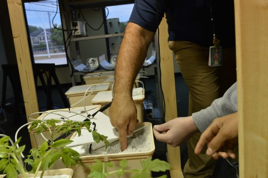 """""""When we first planted them they were so tiny in this weird foam stuff."""" eighth grader Junior Salgado said."""