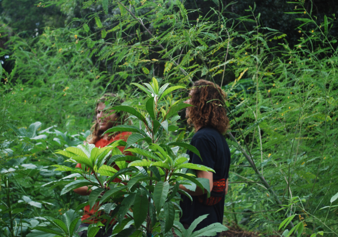 New College's first food forest blossoms: One idea and $20,000 feeds a school