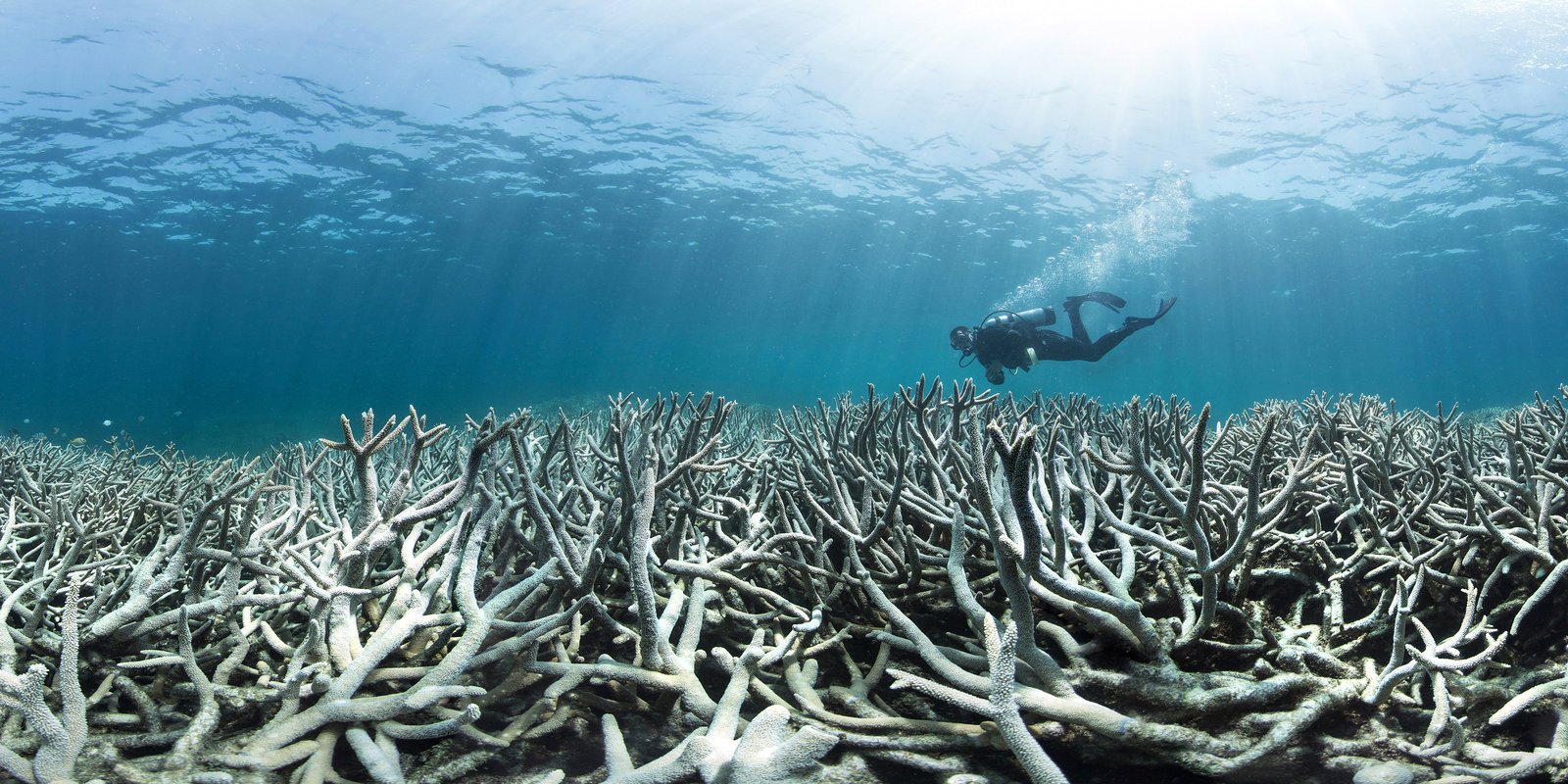 Coral bleaching damages nearly  two-thirds of Great Barrier Reef