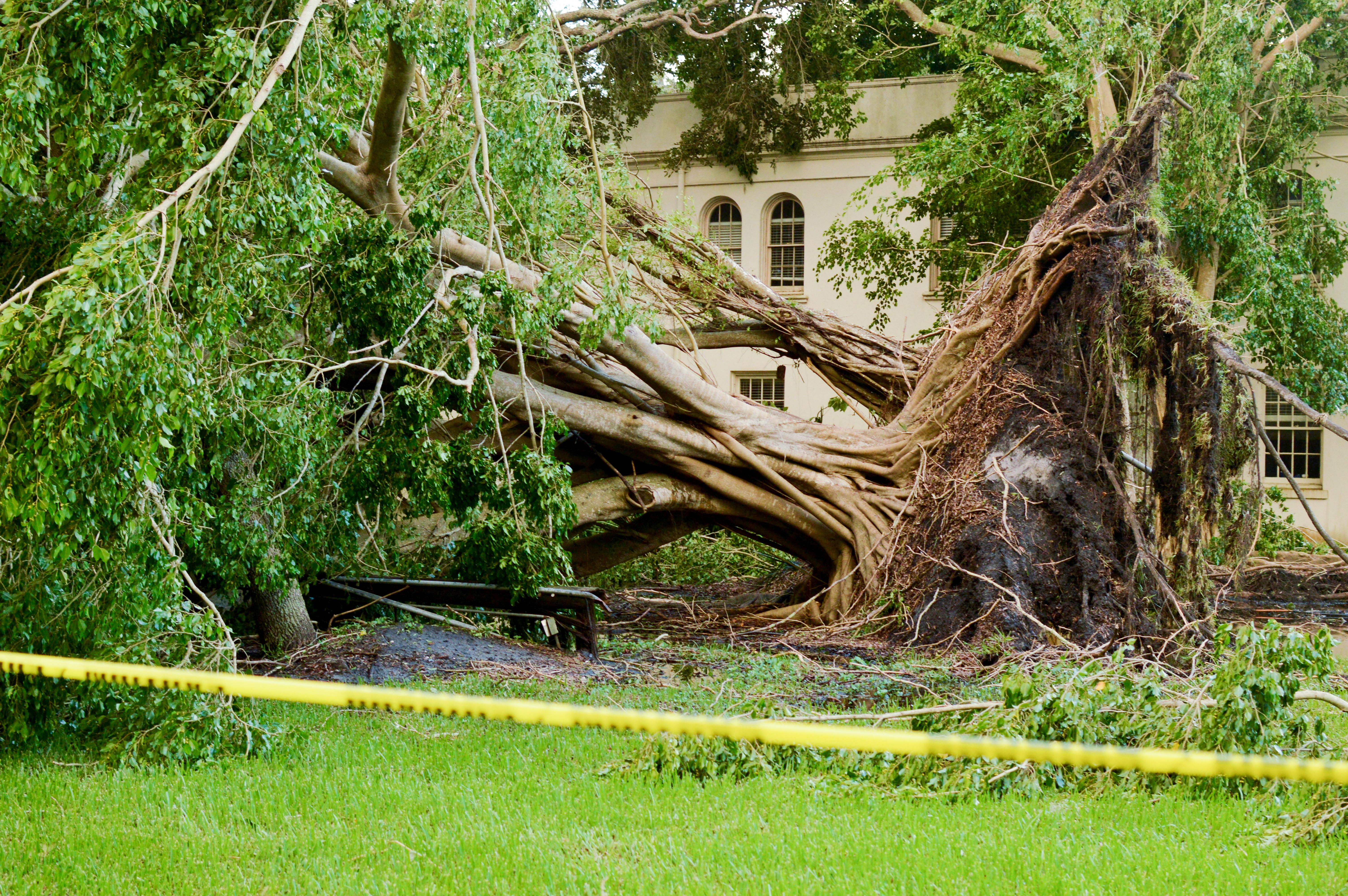 New College survives Hurricane Irma