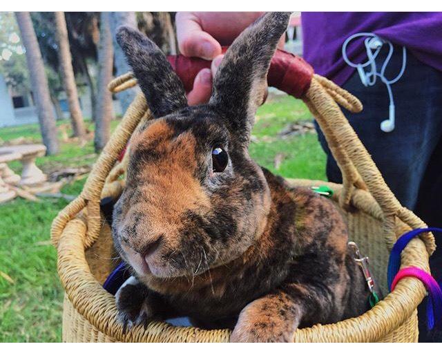 Meet an emotional support animal!