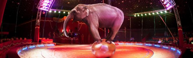 Ireland bans wild animals in the circus