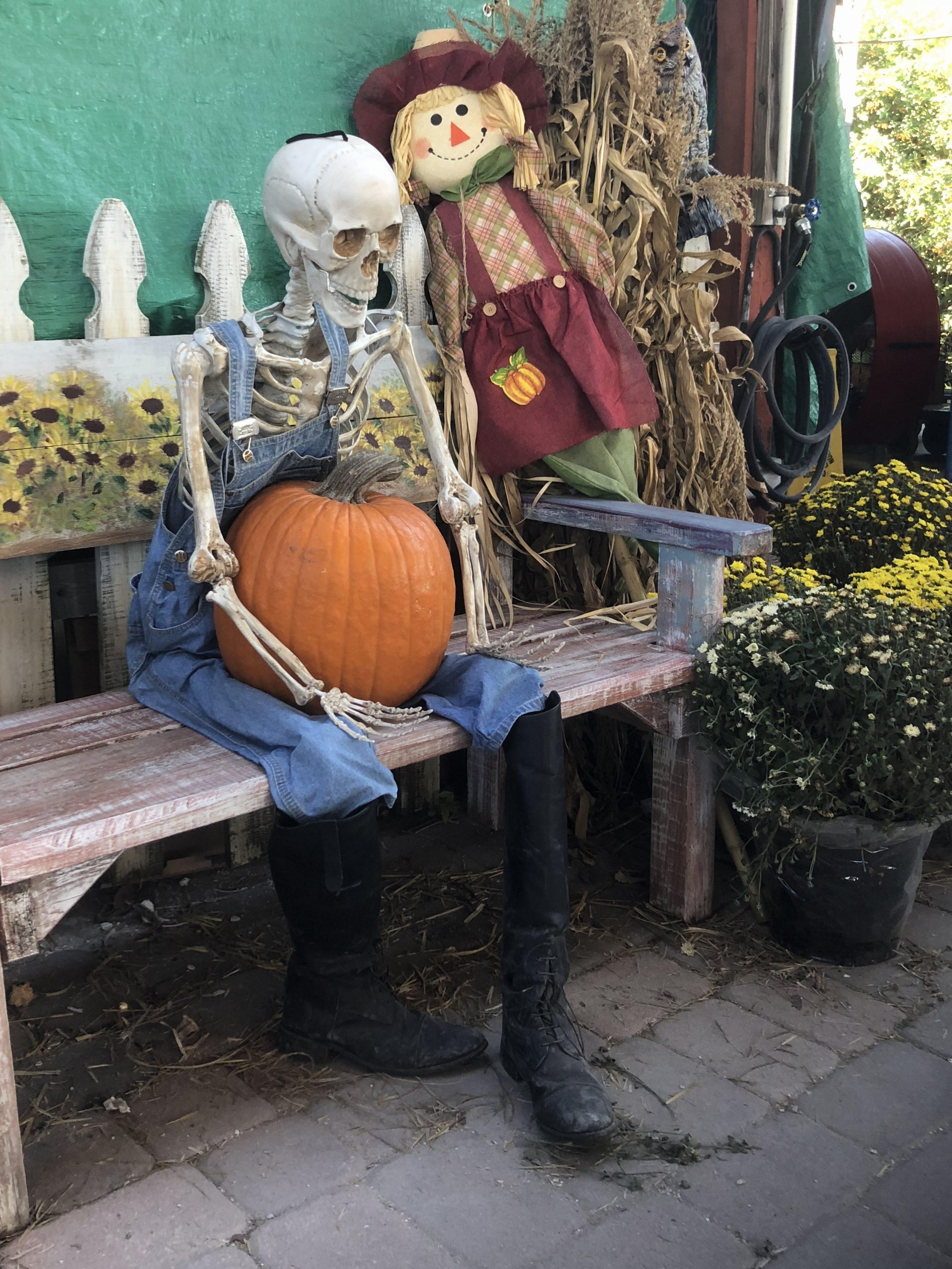 30th Annual Pumpkin Festival sparks fall feelings in SRQ