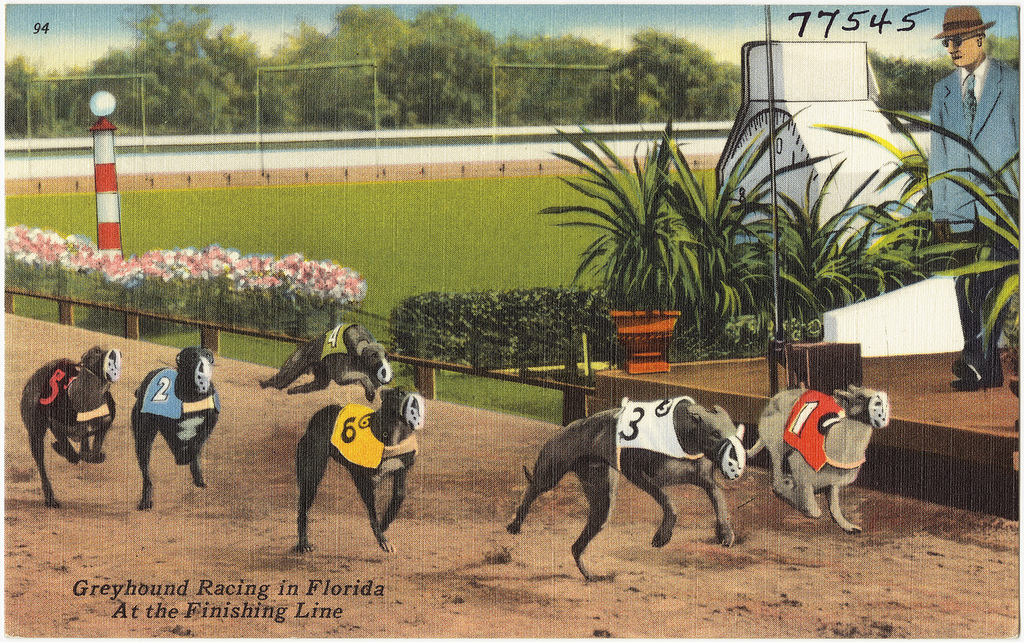 Florida amendment 13 could ban dog-racing