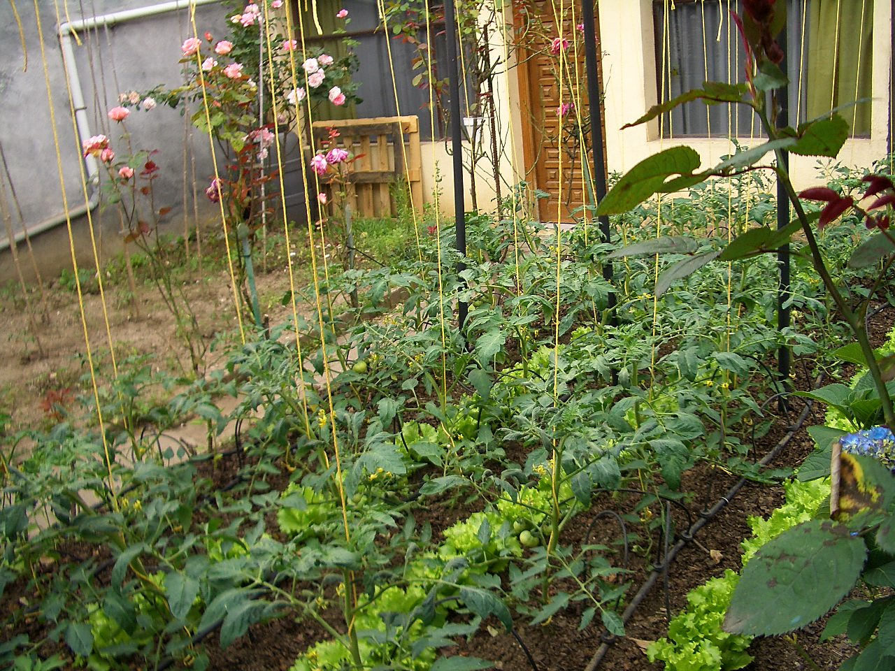 Florida Senate legalizes gardening in private front yards