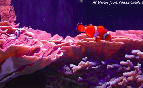 Students explore Mote's marine opportunities