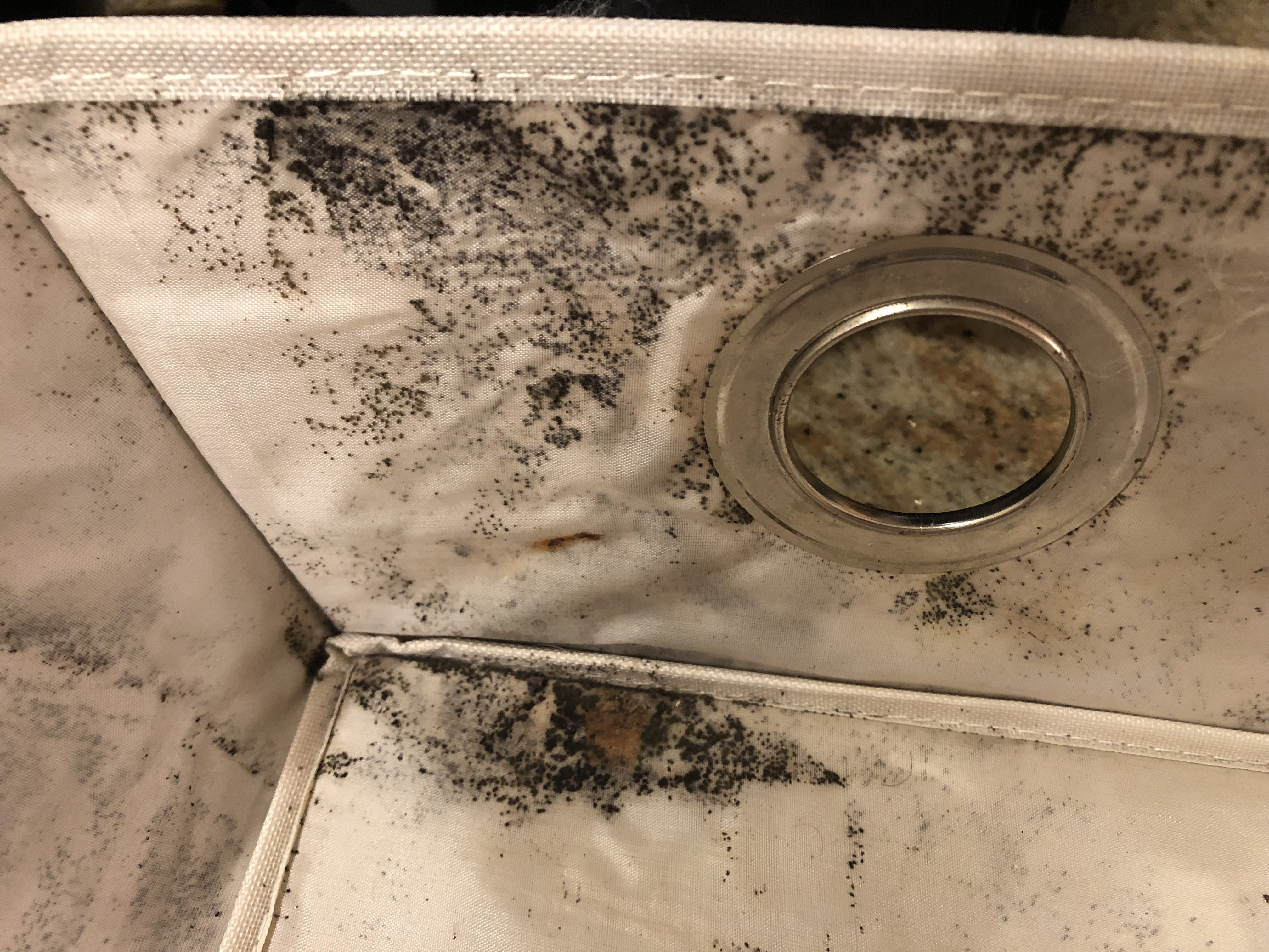 Mold and mildew pervade campus