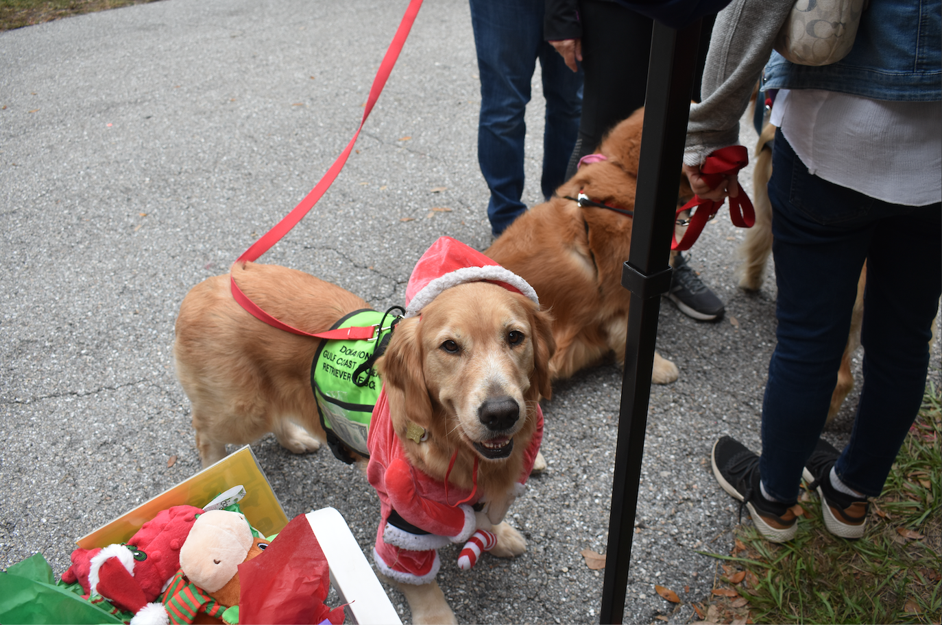 Canine Christmas aims to find homes for shelter dogs